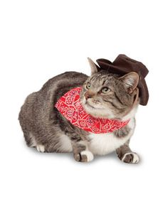 382 Best Cats in clothes images
