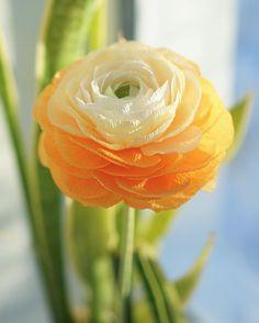 Handmade crepe paper ranunculus #paperflower #paperranunculus #ranunculus #crepepaper #crepepaperflowers #paperflowers