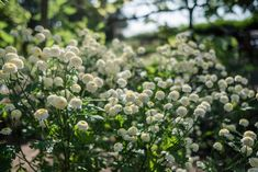 Mutterkraut Gardening, Fruit, Blog, Mulches, Potting Soil, Fruit Garden, Organic Beauty, Lawn And Garden, Horticulture