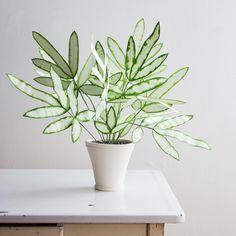 silver ribbon fern Foliage Plants, Potted Plants, Indoor Plants, Hanging Plants, Indoor Gardening, Indoor Ferns, Indoor Cactus, Hanging Gardens, Nature Plants