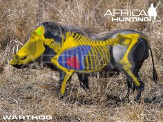 Hunting Warthog Shot Placement Post your questions, comments or pictures relating to hunting shot placement. Shooting Targets, Shooting Guns, Shooting Range, Africa Hunting, Boar Hunting, Hunting Guide, Deer Hunting Tips, Cool Optical Illusions, Wild Boar