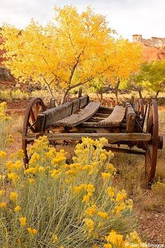 Yellow autumn foliage surrounds the remains of an old wagon. Lovely quaint western scene