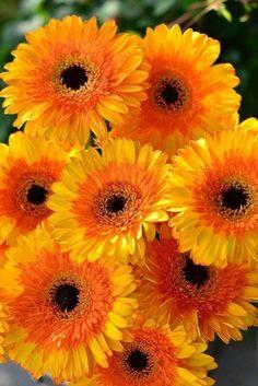 Orange Flowers, My Flower, Wild Flowers, Beautiful Flowers, Orange Plant, Flower Phone Wallpaper, Good Morning Flowers, Pretty Wallpapers, Mellow Yellow