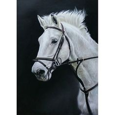 A recent pastel commission.   #horse #equine #equestrian #pony #horserace #horseriding #horserider #horseandrider #horseart #pastels #whitehorse #beautiful #beauty #majestic #horsey #horses