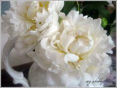 Spring Wedding: White Peonies