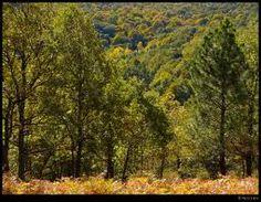 La fauna es rica y variada e incluye todo tipo de animales.El ecosistema de bosque mediterráneo es muy sensible a la desertización si se destruye su cubierta vegetal. Las lluvias torrenciales arrastran el suelo con facilidad y se erosiona con gran rapidez.