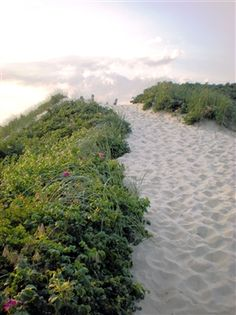 Nantucket beach path