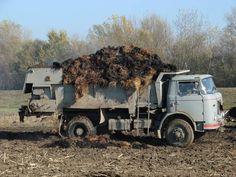 Trucks, Cars, Vehicles, Agriculture, Autos, Truck, Car, Car, Automobile