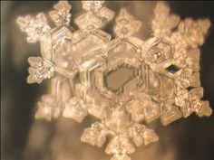 Apa structurata: Apa un organism viu - Dr. Masaru Emoto