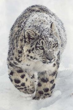 Cute Animals Covered in Snow! (Pictures) | Incredibly Beautiful Pictures Of Animals During Winter by Pioneer Settler at  http://pioneersettler.com/cute-animals-covered-snow/
