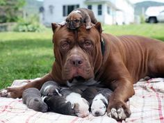 Stolze Hunde-Mamis