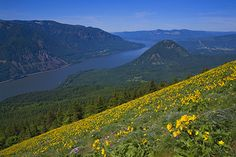 Dog Mountain, Columbia Gorge - Washington! Hotel Liquidators liquidates, sells, removes, ships, and installs furniture to make your job easier for you! Call Hotel Liquidators at (248) 918-4747 or visit our website www.hotelliquidator.net for more information!