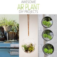 Awesome Air Plant DIY Projects - The Cottage Market