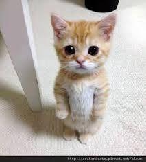 """""""猫""""的图片搜索结果"""