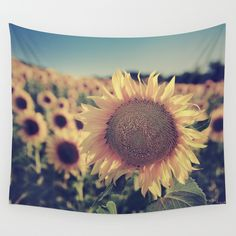 sunset,sunray,sunrise,sunflower,flower,flowers,spring,floral,yellow,sun,star,forest,trees,landscape,nature,photography,trees,summer,plants,sky,bokeh,blue,photo,rural, beauty