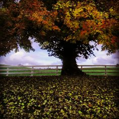 Horse country, Baltimore county, Maryland in the fall. autumn.