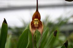 orquídeas, flores