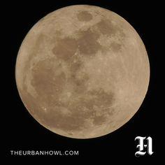Moon Wisdom Week Starting Nov 14: An Understanding Of What Is Coming Next