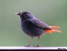 Beautiful Birds, Beautiful Pictures, Gifs, Bird Gif, Cinemagraph, Cute Birds, Little Birds, Wild Animals, Feathers