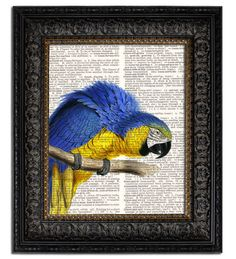 BLUE & GOLD MACAW PARROT Dictionary Art Print