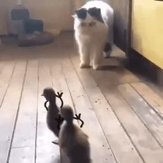 51 Ideas Funny Cats And Dogs Hilarious Kitty Funny Animal Videos, Cute Funny Animals, Funny Animal Pictures, Animal Memes, Cute Baby Animals, Funny Cute, Cute Cats, Hilarious, Photo Chat
