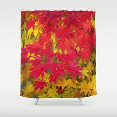 Scarlet and gold autumn maple leaves shower curtain, color photography…
