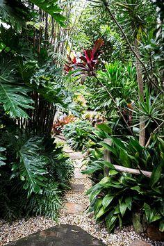 Jardinage tropical par la plage - Un jardin de Sydney Northern Beaches est devenu un paradis luxuriant, jetez un œil! Small Tropical Gardens, Tropical Garden Design, Tropical Backyard, Tropical Landscaping, Landscaping With Rocks, Tropical Plants, Landscaping Ideas, Backyard Landscaping, Jungle Gardens