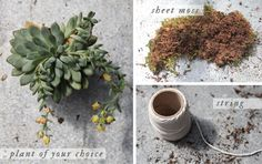DIY Garden: Kokedama Hanging Plant, What You Need
