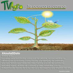 #AnotaElDato Las plantas son seres vivos autótrofos..... ¿Sabes qué significa esto?