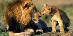 Avaaz - Fermiamo la tratta dei leoni: grande vittoria in tribunale!