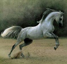 By Wojtek Kwiatkowski, one of the most famous horse photographers worldwide.
