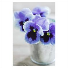 Pansies in a silver cup. Sweet.