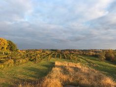 View of South Vineyard Oct 2018