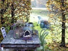 Ein Herbstgarten voller Geheimnisse - Pflanzenfreude.de