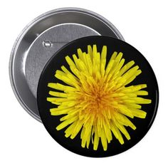 Summer Sunny Yellow Dandelion Flower on any Color Button