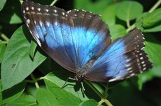 I took this pic @ zoo Boise's Butterfly exhibit