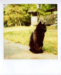 #cute, #cat, #kitten