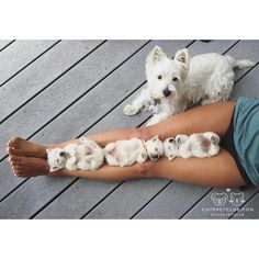 From @sugarwestie: why wont they play with me? #cutepetclub [source: http://ift.tt/2cz1HRa ]