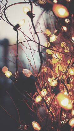 christmas lights,and december
