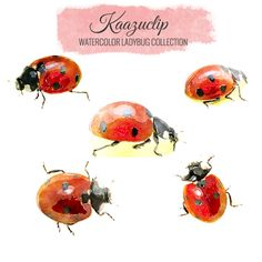 Watercolor Ladybug Set -5 pieces - for Personal and Commercial Use
