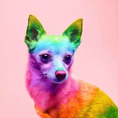 Ramzy Masri is a talented Brooklyn-based graphic designer who uses rainbow colors as a major inspiration for his artwork. Pretty Animals, Colorful Animals, Cute Little Animals, Cute Funny Animals, Animals Beautiful, Baby Animals Pictures, Cute Animal Pictures, Dog Wallpaper, Animal Wallpaper