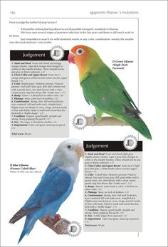 African Lovebirds, Budgies, Parrots, Exotic Pets, Exotic Animals, Bird Poster, Game Birds, Animals Of The World, Bird Feathers