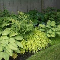 Shade Garden Design Ideas, Pictures, Remodel, and Decor