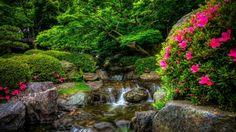 park river flowers hd wallpaper download
