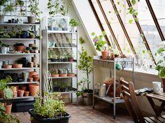 Ein großes Gewächshaus mit grauen Regalen für Blumentöpfe, einem Vitrinenschrank für Setzlinge und HINDÖ Pflanztisch in Grau