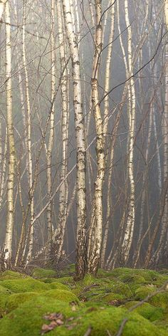 love the colours...Birch Grove by Dušan Dobeš, via Flickr