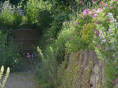 Trockenmauer mit Wildpflanzen