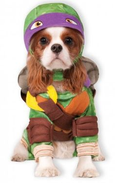 Donatello Teenage Mutant Ninja Turtle Pet Costume 3825e211e