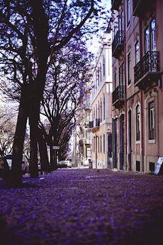 avenida dom carlos I. lisbon. portugal.