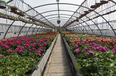 Santa Elena Day Trip: Silleteros and Flower Farm Cultural Tour 			Medellín is loco for flowers. Participants in the annual flower festival use 600,000 flowers to create plus-size images of animals, people and objects. See where the flowers come from by visiting a flower farm about 45 minutes outside of Medellín. Chat with the flower farmer, or silletero, and stroll the farm taking in all the flowers and their lovely aromas. Then visit Santa Elena, where farmers produce an abu...